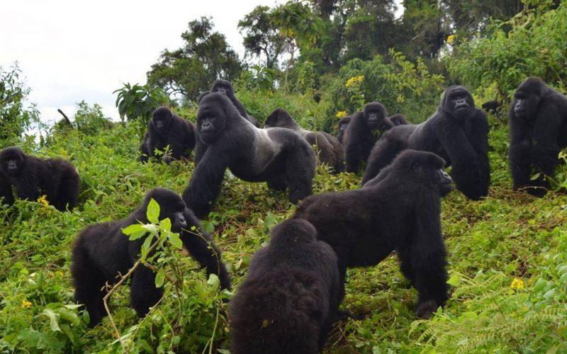 Adventure in Uganda
