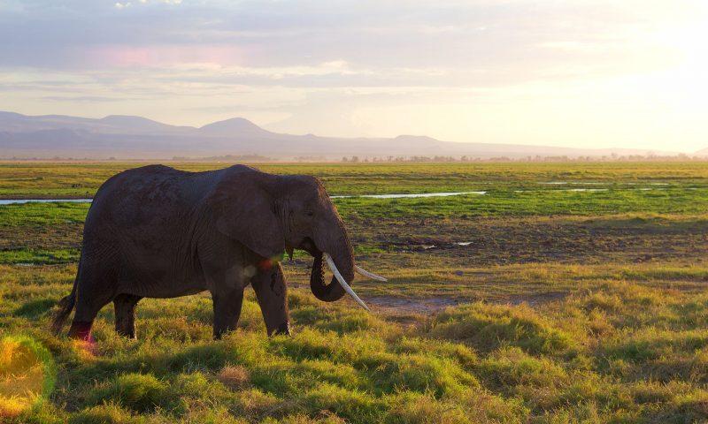 Amboseli1