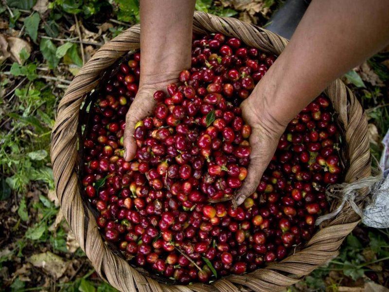 Coffee Farm Excursion2
