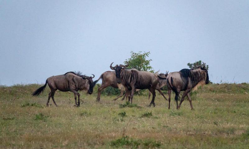 Kenya Tanzania safari1