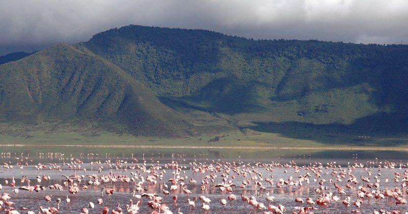 Ngorongoro12