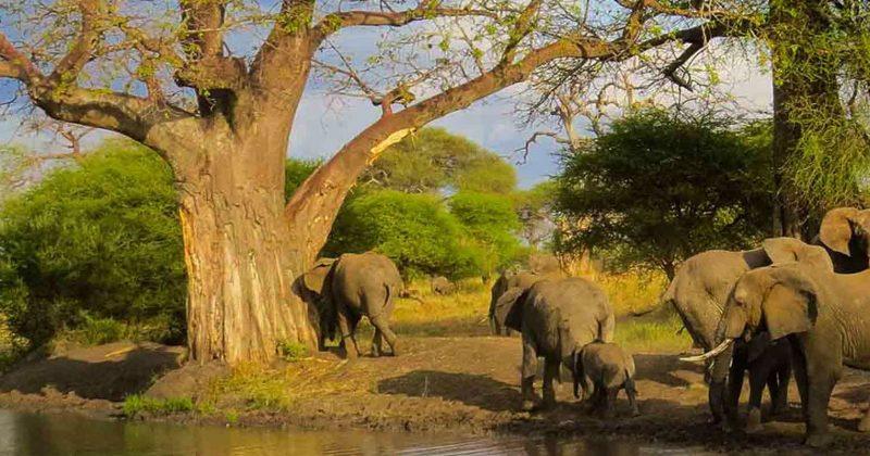 arusha national park2