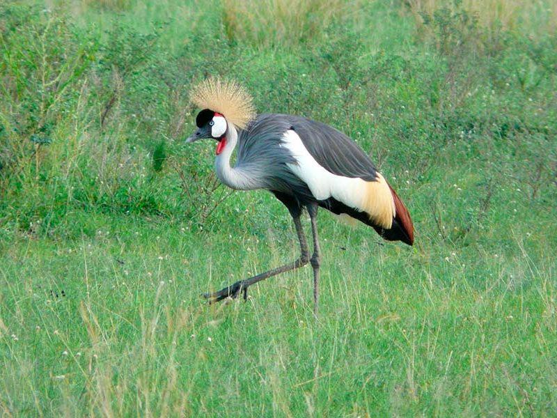 bird watch1