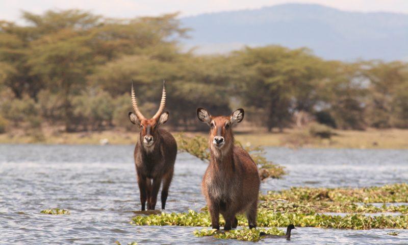 kenya tanzania safari4