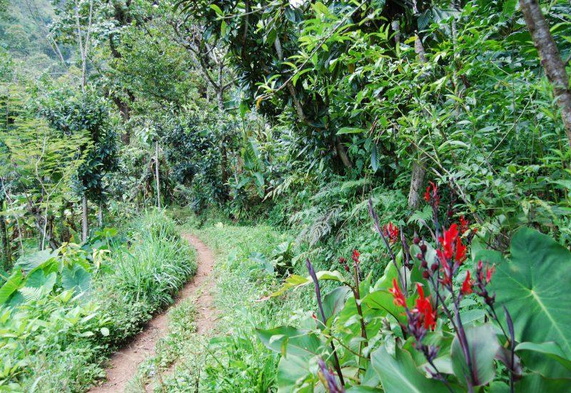 mountain village Shimbwe