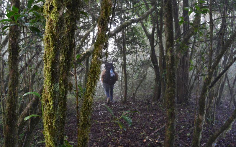 shagayu forest