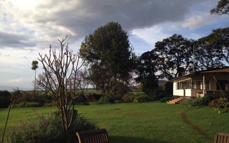 simba-farm
